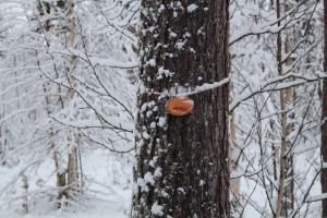 Marked tree.