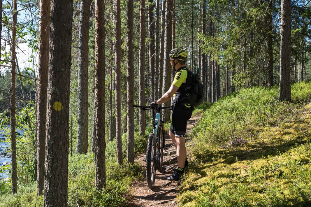 Biker on a forest path.