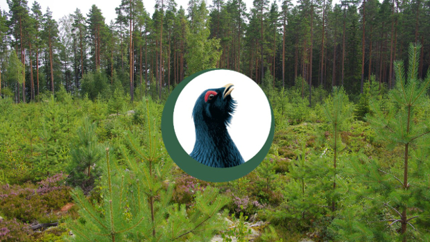 Tapio's Best practice's logo and young forest in the background.