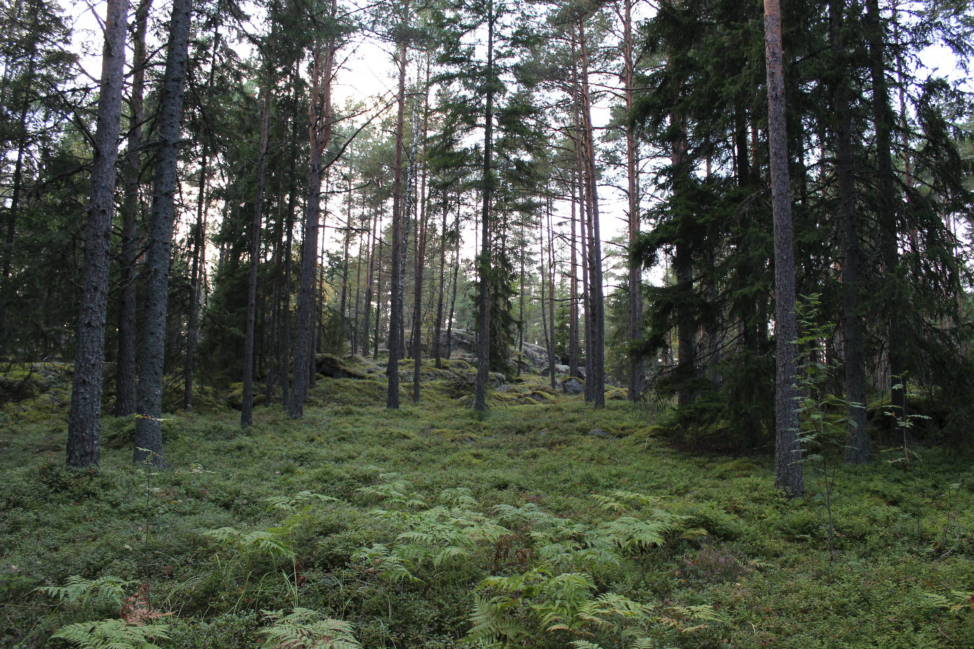 Forest.