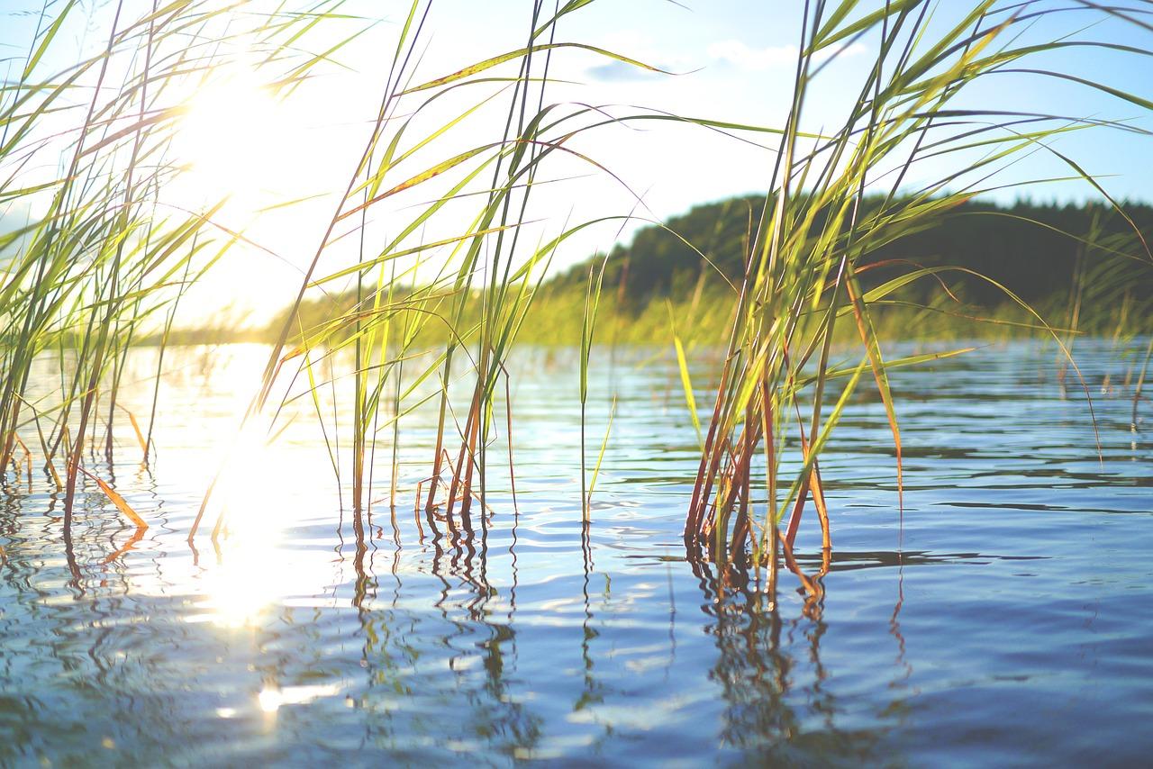 A lake view with lake plants.