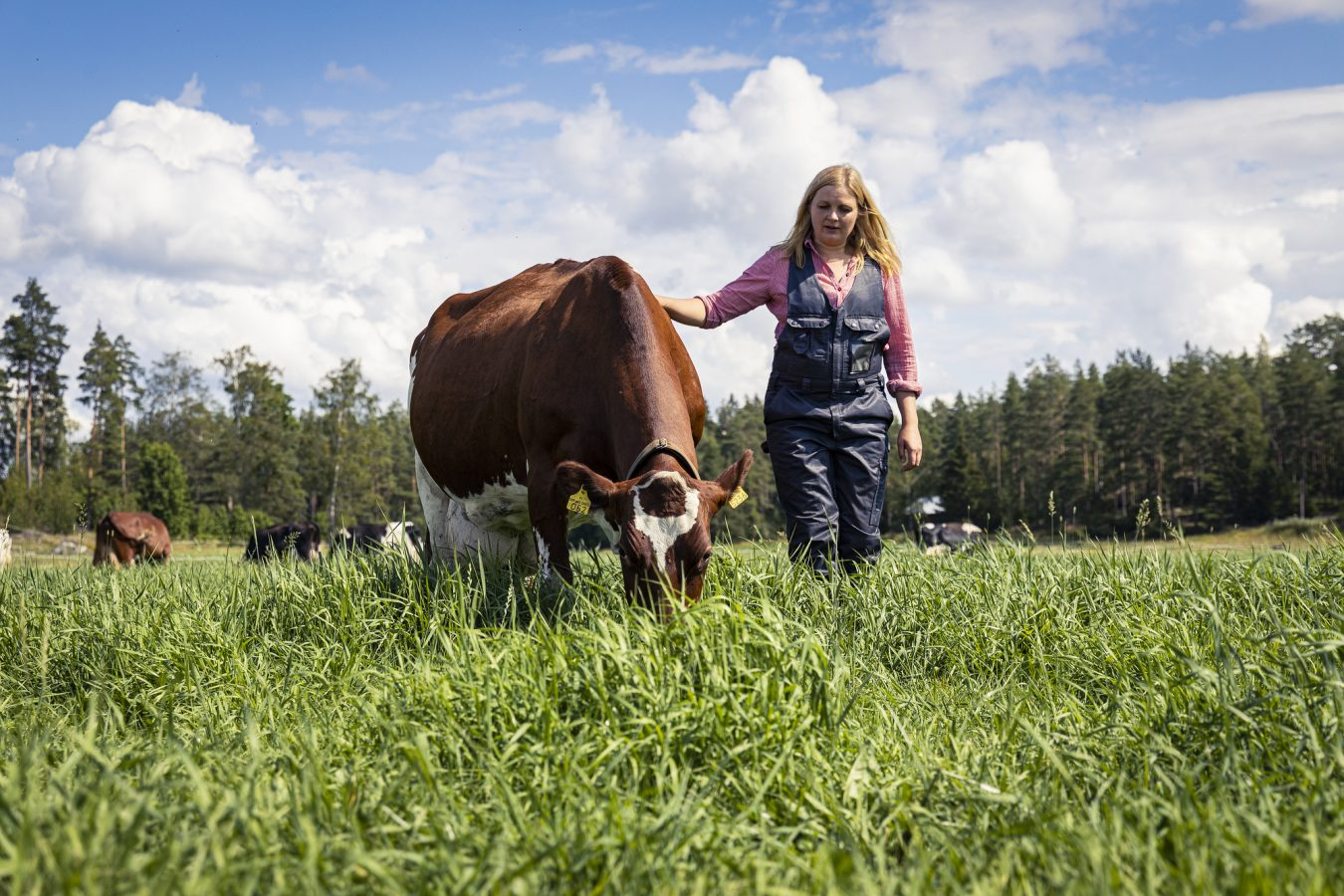 A woman and a grazing cow.
